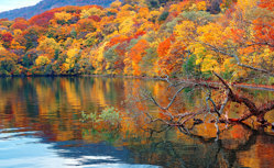 紅葉と日本周遊クルーズ